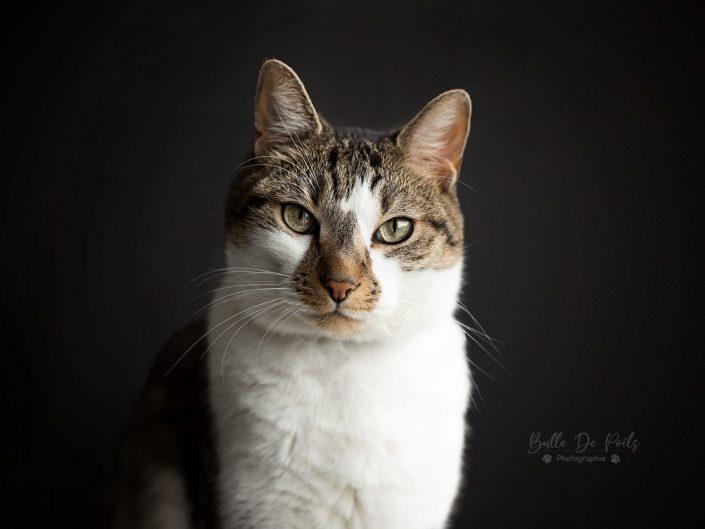 portrait chat tigré
