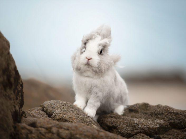 lapin nain blanc a la plage