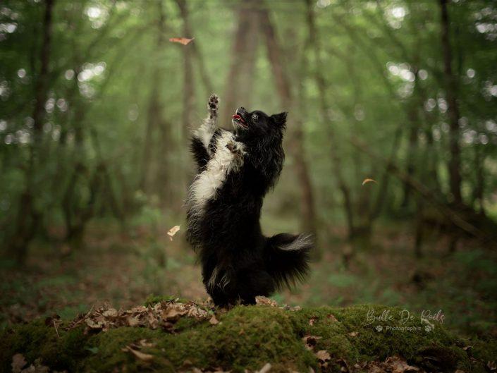 Shih-tzu en forêt